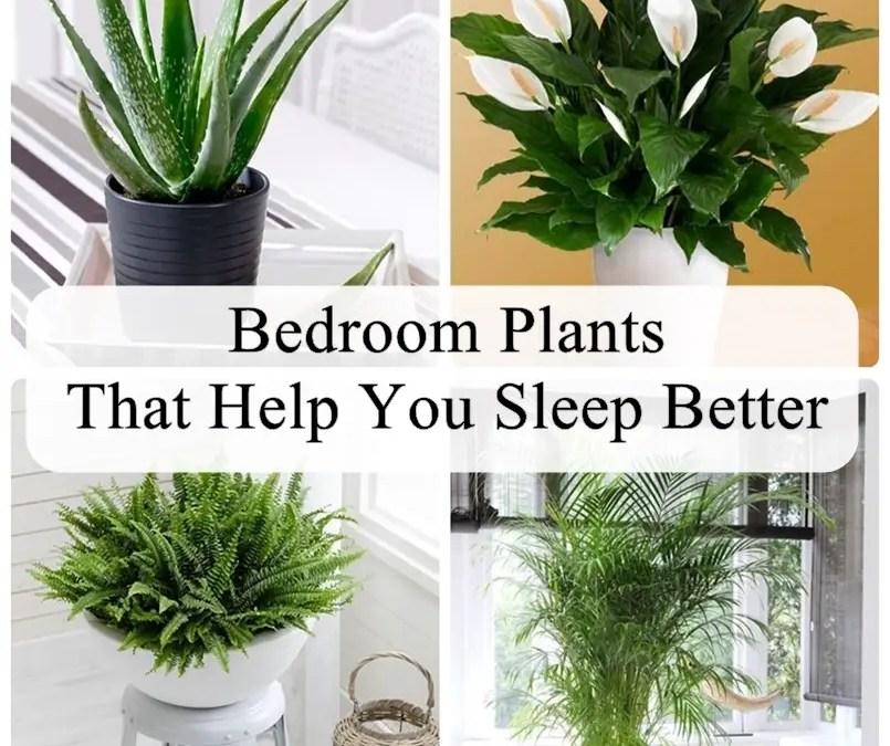 Bedroom Plants That Help You Sleep Better