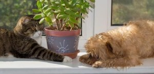 Awesome houseplants that are safe for animals 05