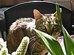 Awesome houseplants that are safe for animals 06