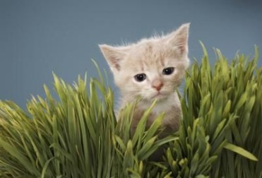 Awesome houseplants that are safe for animals 13