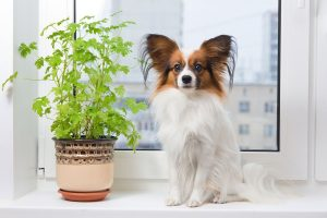 Awesome houseplants that are safe for animals 14