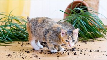 Awesome houseplants that are safe for animals 23