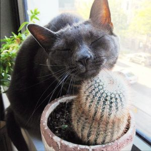 Awesome houseplants that are safe for animals 27