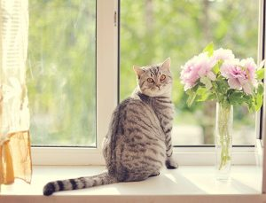 Awesome houseplants that are safe for animals 31