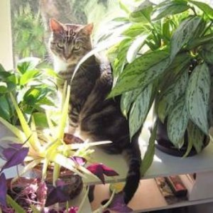 Awesome houseplants that are safe for animals 32