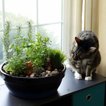 Awesome houseplants that are safe for animals 33