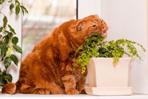 Awesome houseplants that are safe for animals 34