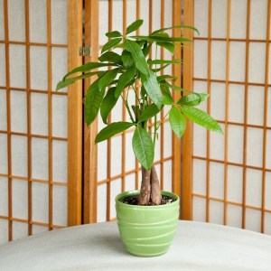 Awesome houseplants that are safe for animals 37