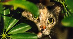 Awesome houseplants that are safe for animals 39