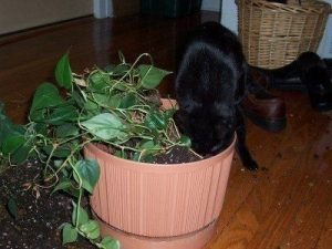 Awesome houseplants that are safe for animals 44