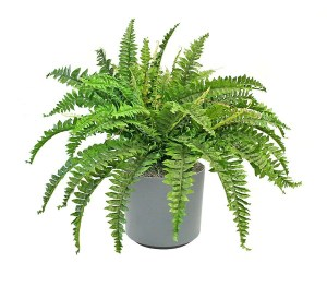 Awesome houseplants that are safe for animals 45