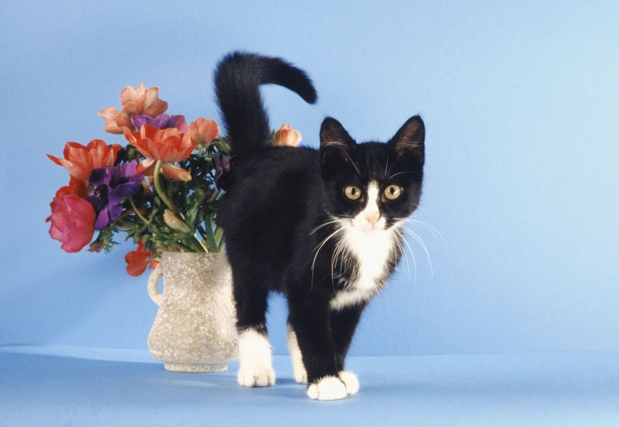 Awesome houseplants that are safe for animals 47