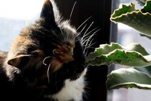 Awesome houseplants that are safe for animals 48
