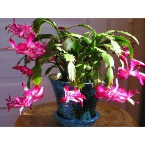 Awesome houseplants that are safe for animals 50