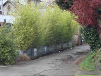 Bamboo fence ideas for small houses 40
