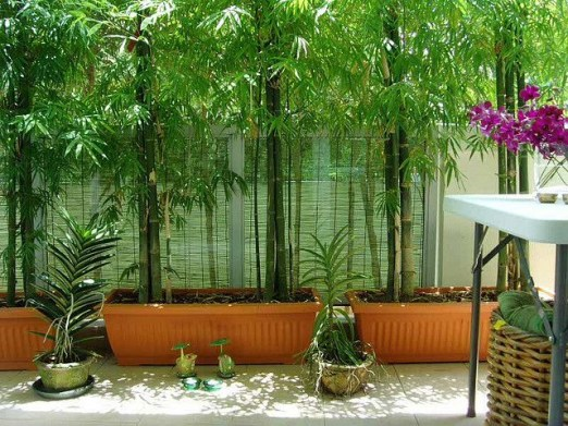 Bamboo fence ideas for small houses 48