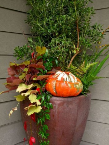Colorful winter planters for your outdoor decorations 02