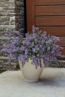 Colorful winter planters for your outdoor decorations 15