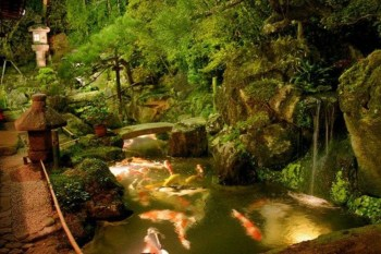 Design a fish pond garden with a waterfall concept 40