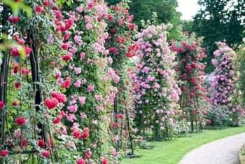 Amazing rose garden ideas in this year 03
