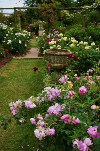 Amazing rose garden ideas in this year 21