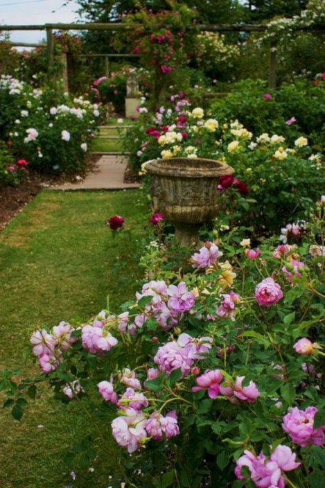 Amazing rose garden ideas in this year 21