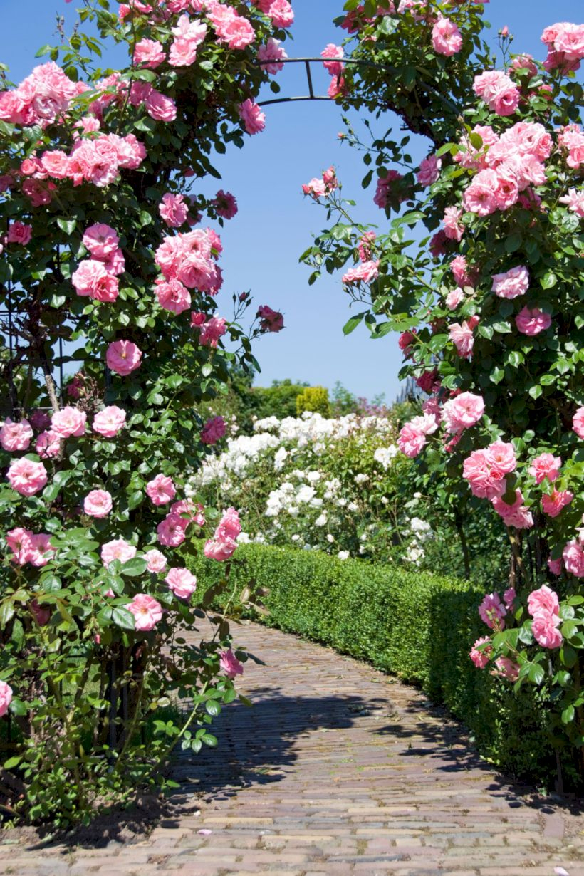 Amazing rose garden ideas in this year 31