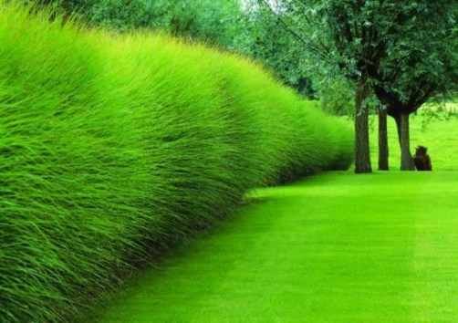 Garden design that is refreshing and comfortable 31