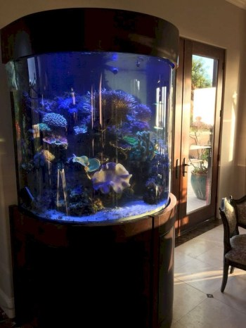 Aquarium design ideas that make your home look beauty 07