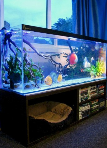 Aquarium design ideas that make your home look beauty 11
