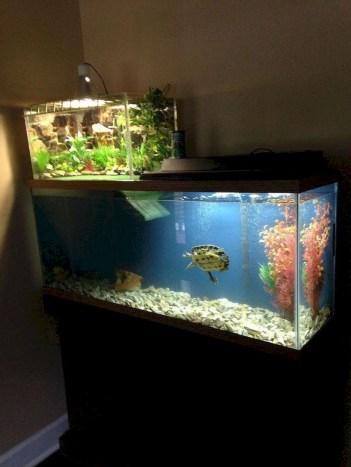 Aquarium design ideas that make your home look beauty 14