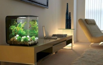Aquarium design ideas that make your home look beauty 23