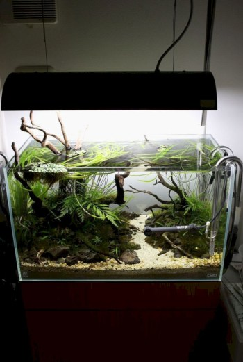 Aquarium design ideas that make your home look beauty 30