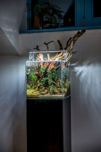 Aquarium design ideas that make your home look beauty 42