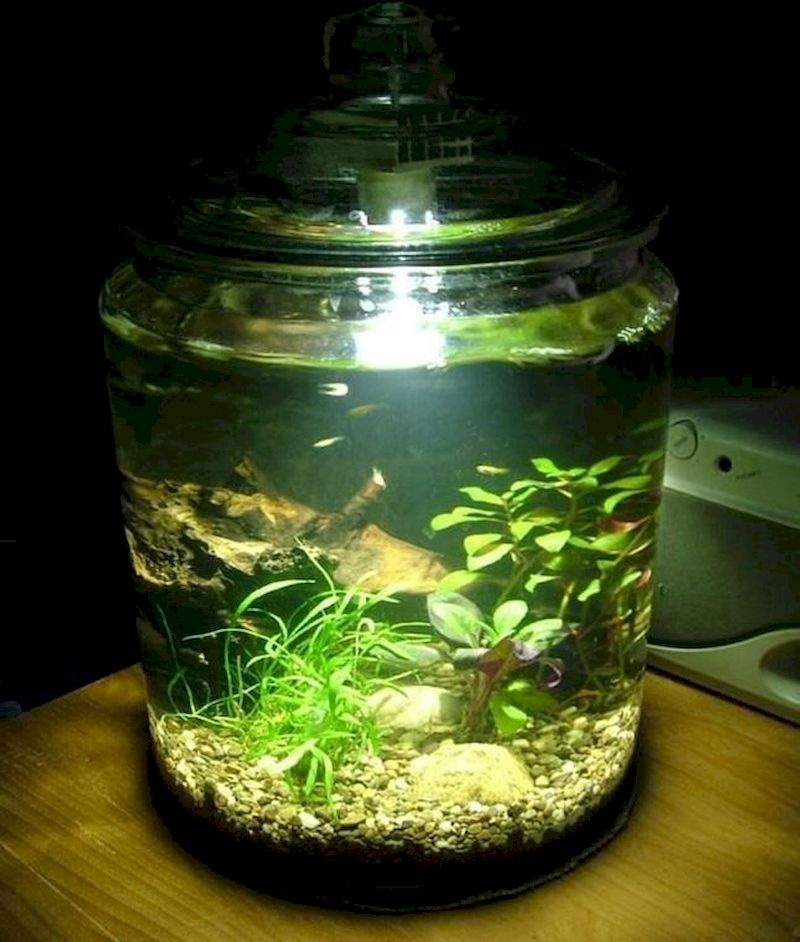 Indoor water garden ideas that fresh your room 20