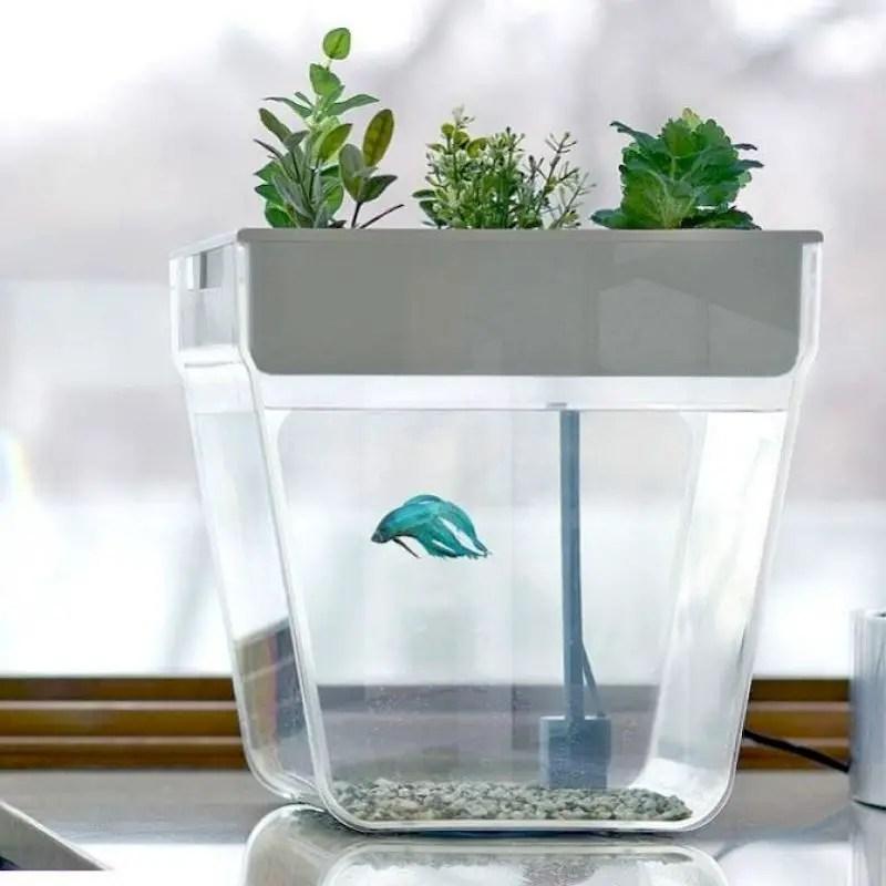 Indoor water garden ideas that fresh your room 21