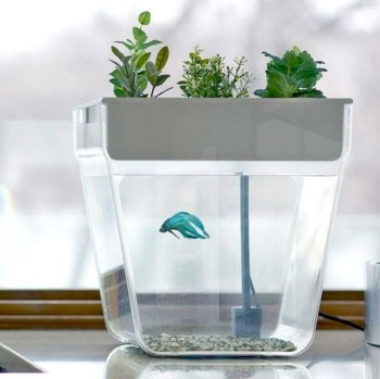 Indoor water garden ideas that fresh your room 21
