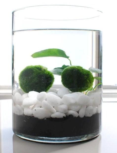 Indoor water garden ideas that fresh your room 29
