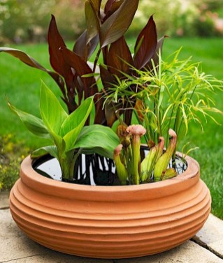 Indoor water garden ideas that fresh your room 44