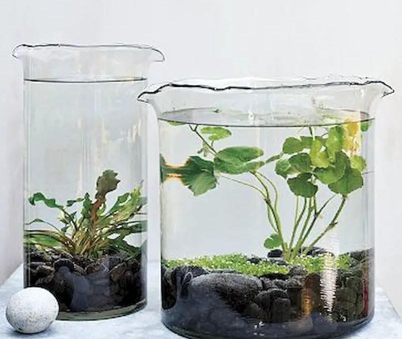 55 Indoor Water Garden Ideas That Fresh Your Room