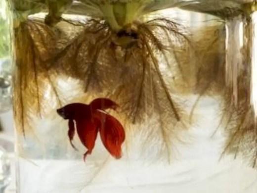 Indoor water garden ideas that fresh your room 53