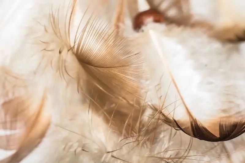 Luxury bedroom design ideas with goose feather 21