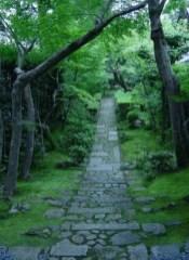On budget garden walk path ideas for an easy movement around the garden 11