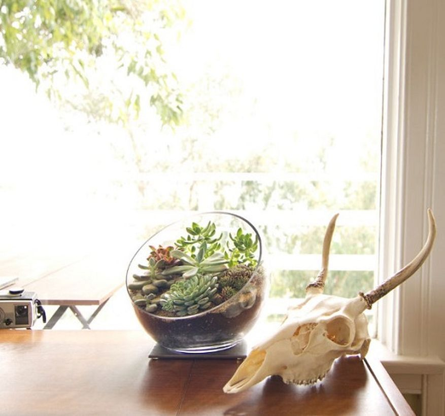 Simple terrarium designs for your home decoration with globe glass terrarium for succulent arrangmnet you must try