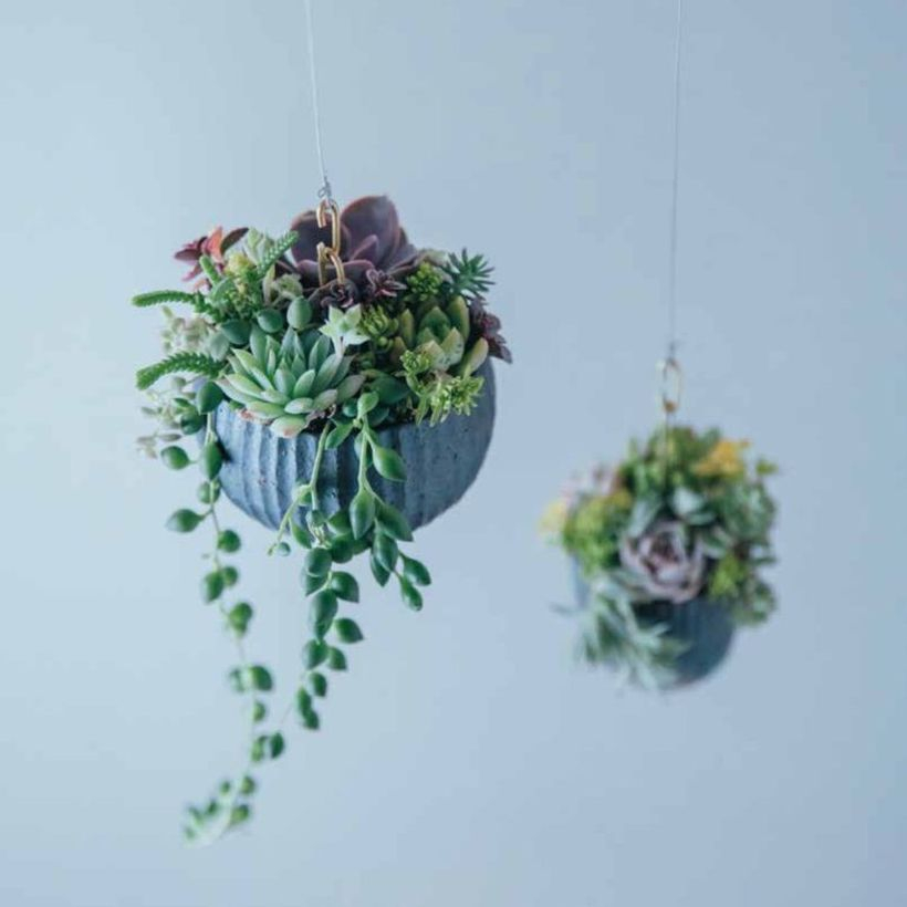 Small hanging succulent ideas with round gray pot to look pretty