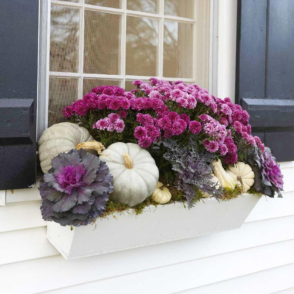 Window plants combined with white pumpkins