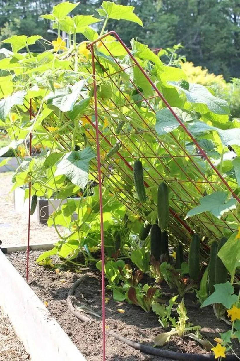 Iron trellis for vegetable buffer