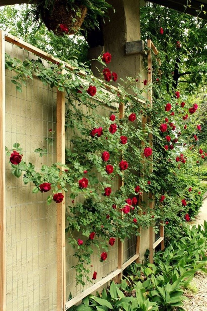 Wire and wooden trellis