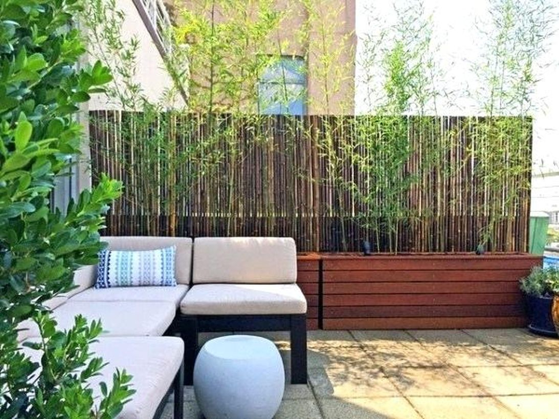 Exotic bamboo plants