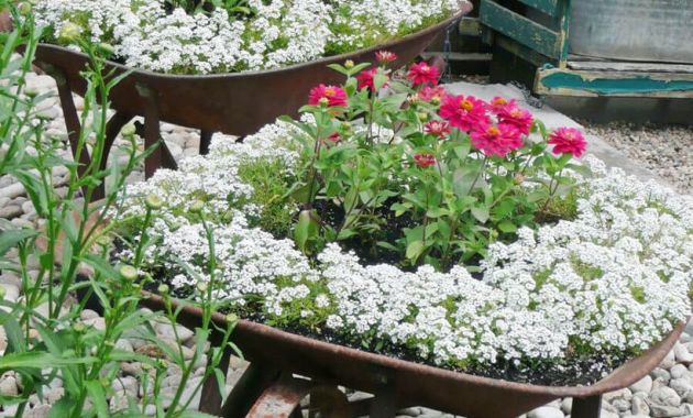Planter-vintage-garden-with-unused-angkong-is-used-to-grow-garden-plants-to-make-it-look-beautiful